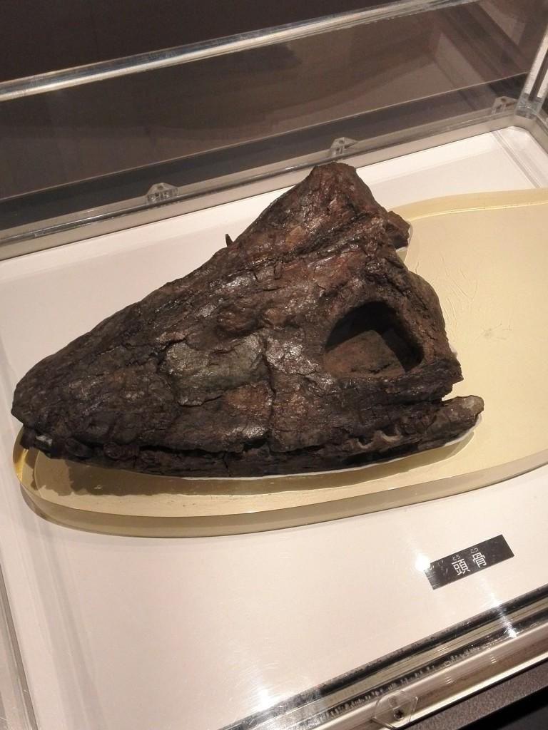 国立科学博物館 フタバスズキリュウの頭骨