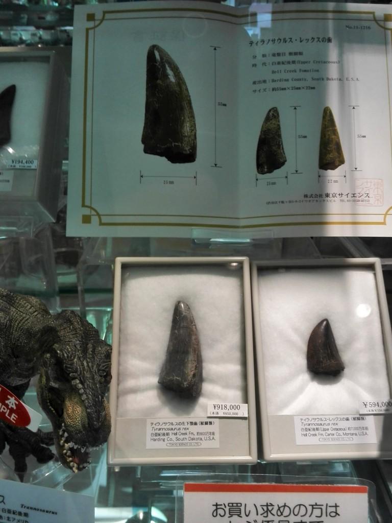 国立科学博物館 売店のティラノサウルスの歯