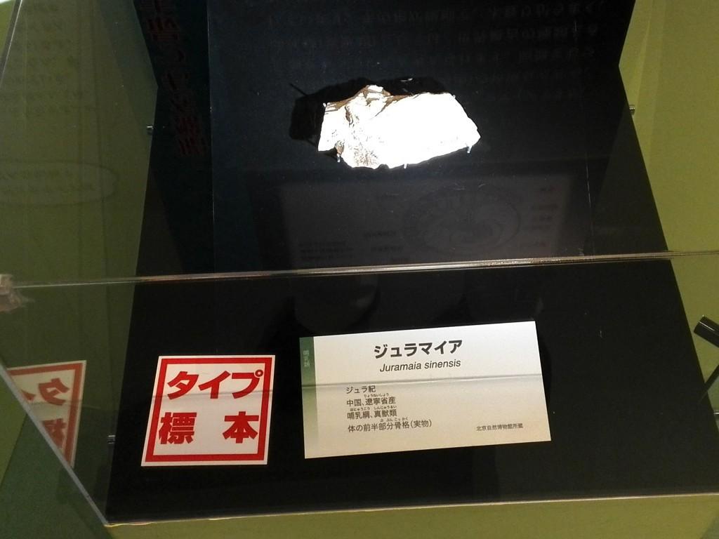 国立科学博物館 生命大躍進展 ほ乳類ジュラマイア化石