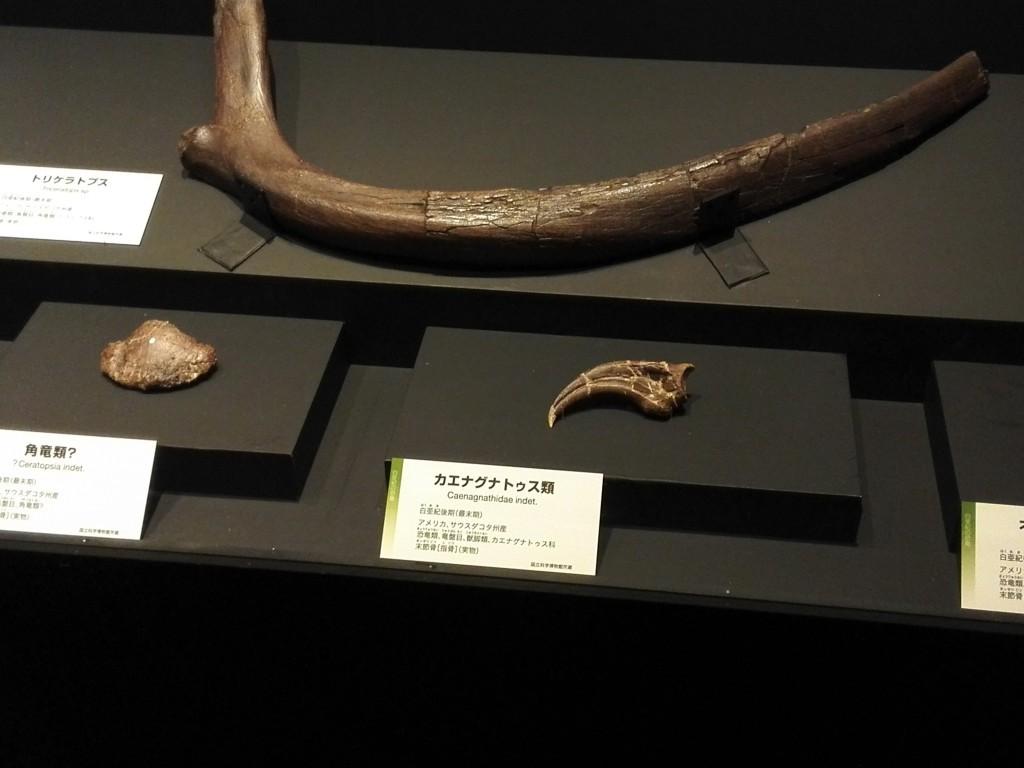 国立科学博物館 生命大躍進展 恐竜実物化石