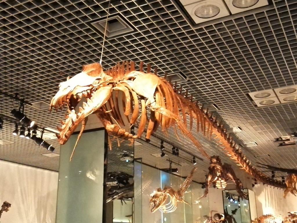 国立科学博物館 地球館 B2F