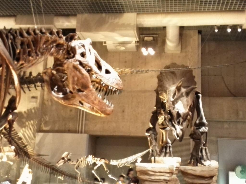 国立科学博物館 地球館 B1F 恐竜