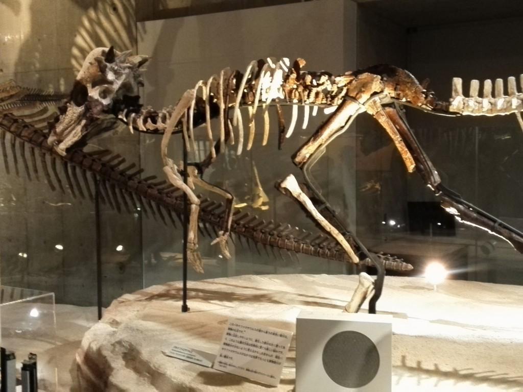 国立科学博物館 地球館 B1F パキケファロサウルス