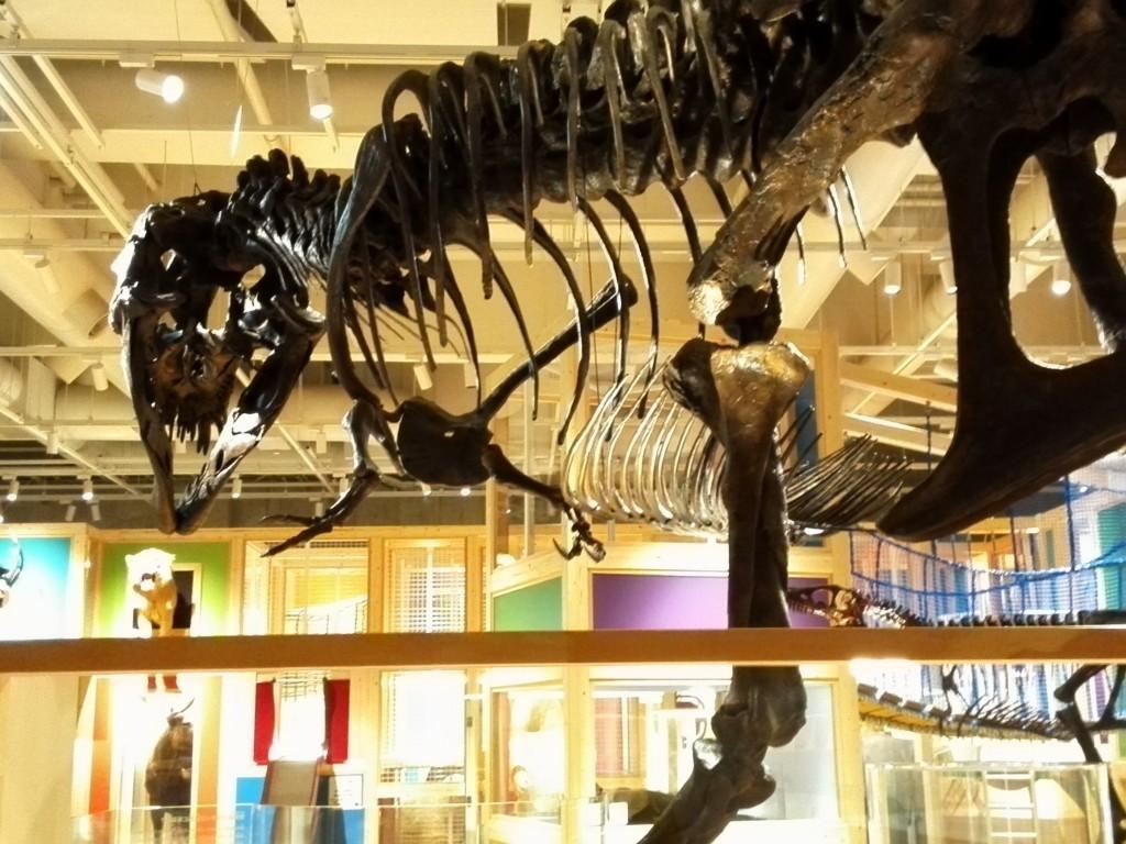 国立科学博物館 地球館 3F 親と子のたんけんひろば コンパス