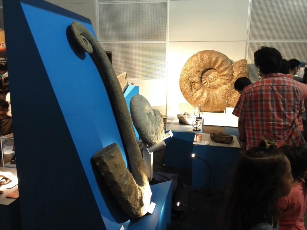 メガ恐竜展2015 巨大なアンモナイト