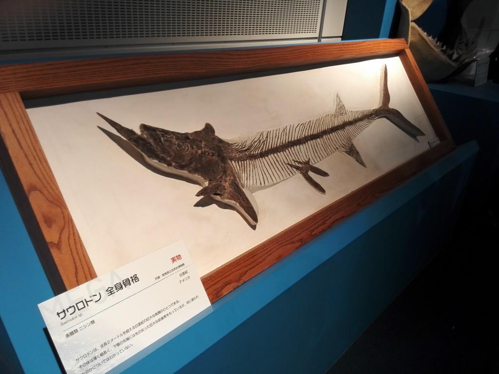 メガ恐竜展2015 サウロドン全身骨格