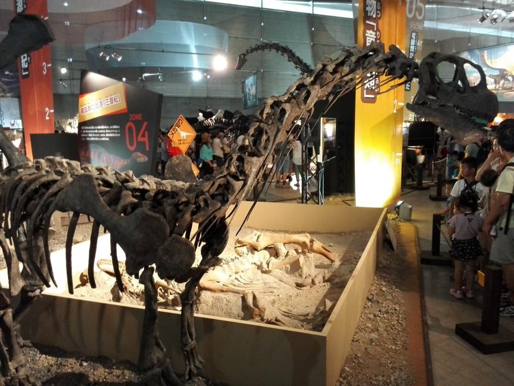 メガ恐竜展2015 カマラサウルス亜成体 実物化石