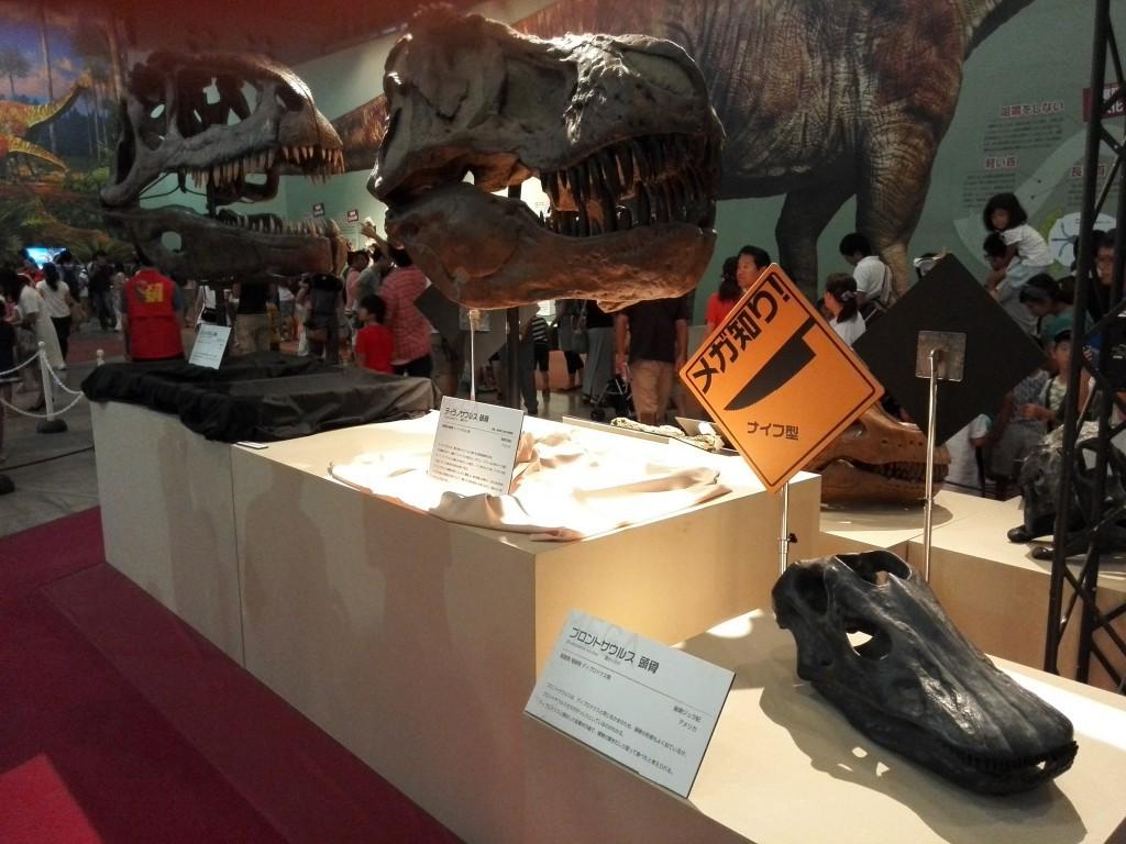 メガ恐竜展2015 ティラノサウルス頭骨レプリカ