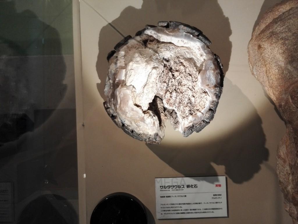 メガ恐竜展2015 サルタサウルス 卵実物化石