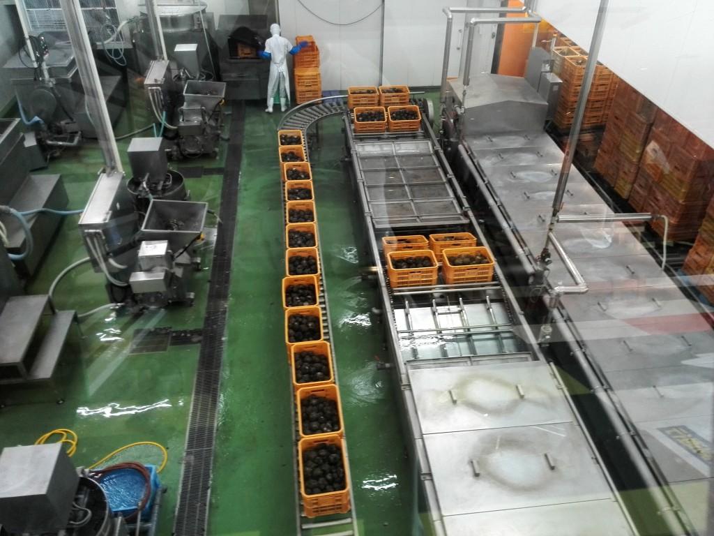 群馬県観光 こんにゃくパーク 工場見学