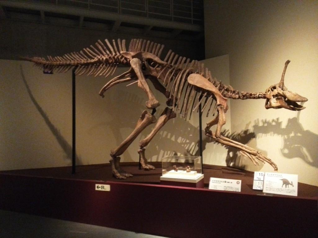 恐竜博2016 ハドロサウルス