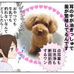 犬が耳を痒がる理由は油と酵母菌の繁殖!?