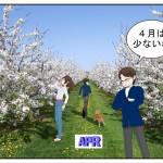 2017年4月株主優待銘柄を選定!心躍る春を迎えられるか!?