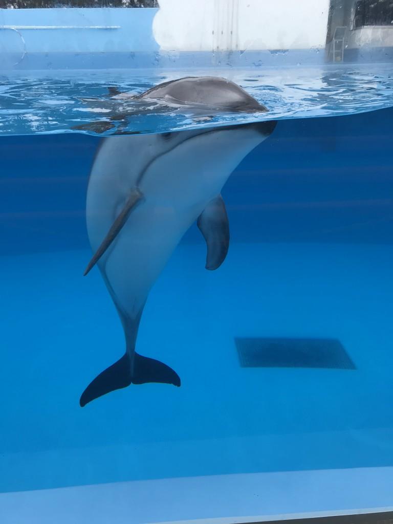 マリンピア日本海 イルカ